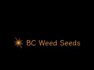 BCWeedSeeds.ca cannabis domains for sale