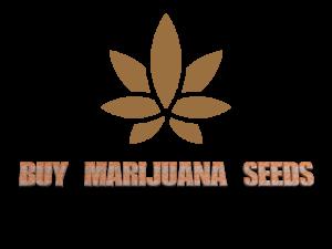 BuyMarijuanaSeeds.org Marijuana Seed Bank Domain Names For Sale