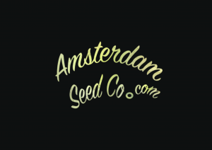 Amsterdam Seed Co